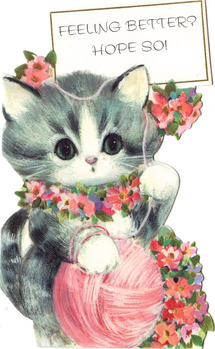 grumpy cat wedding invitations%0A KItten Get Well Card    BC
