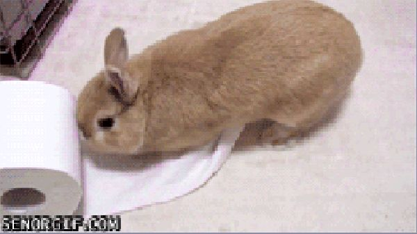 Even when they're causing a ruckus, they manage to do it in the cutest way ever. | 19 Reasons Bunnies Are The Most Underrated Pet