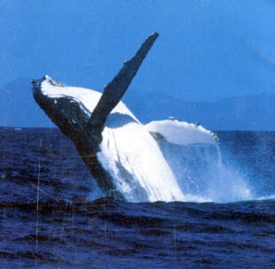 Whale Watching Gold Coast: Bucket List, Mammals Whales, Mother, Whale Watching, Things