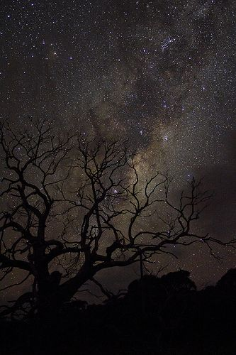 Stary sky from Wilsons Promontory, Victoria, Australia.