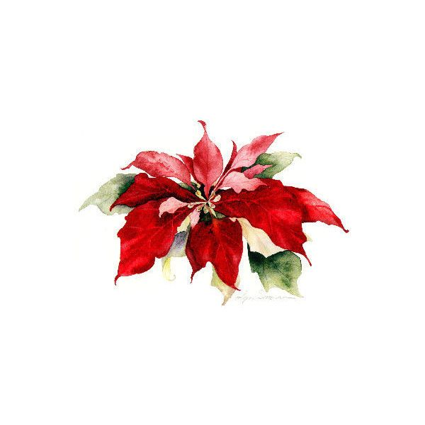 Watercolor by Lyn Snow: Poinsettia - Polyvore