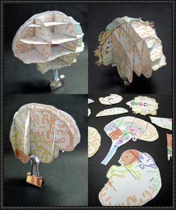 This science paper model is a Brain Atlas, the papercraft was created by soilshop.You can download this paper craft template here: Science Paper Model - Br