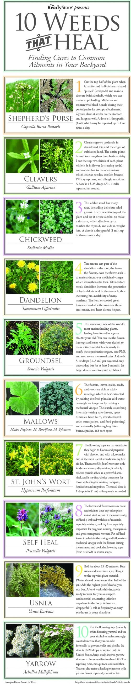 as a reminder> 10 common weeds that can heal you