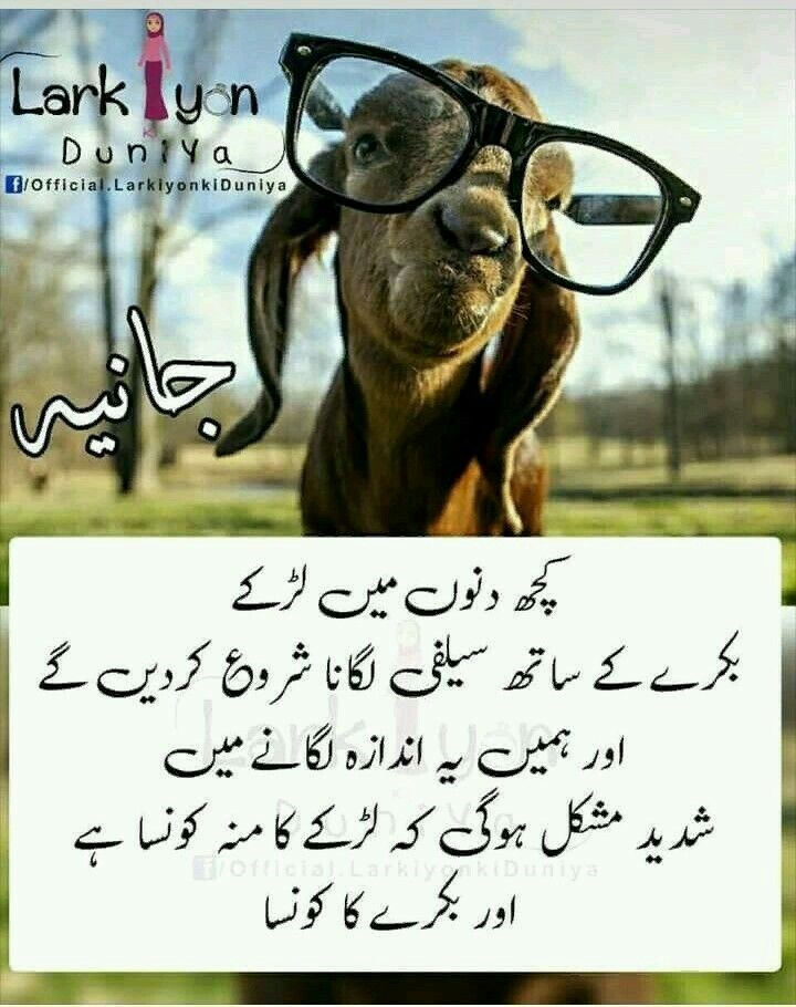 Funny Eid Captions : funny, captions, 😂😂😂😂, Funny, Qoutes,, Jokes,, Quotes
