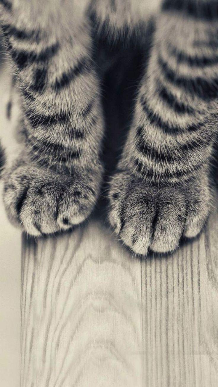 Striped Kitten Legs Wooden Floor