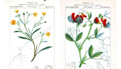 Free Graphics: Set of 4 French Botanical Taxonomy Prints circa 1819