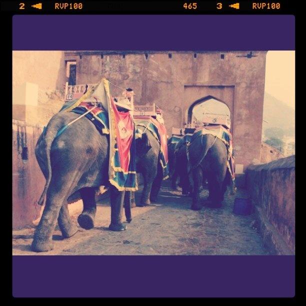 Elephants Arse, Jaipur, India