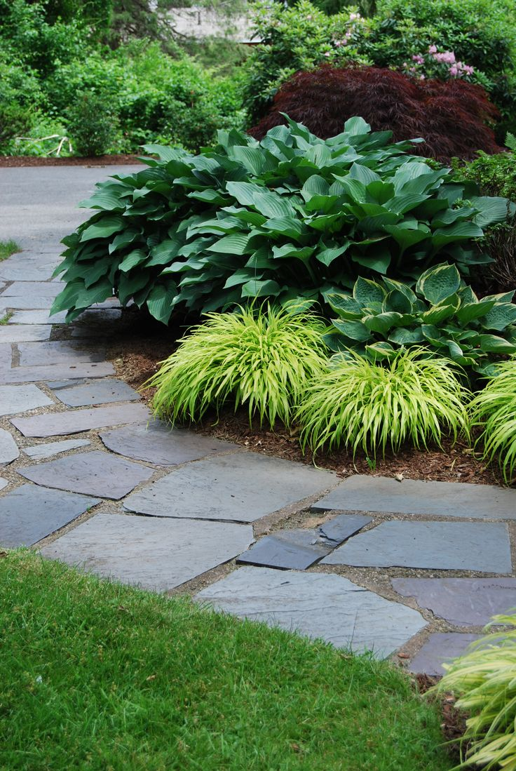 How to care for a fern leaf japanese maple - Bluestone Walkway With Weeping Japanese Maple Hosta And Japanese Fern