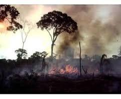 Image result for poluição do ar