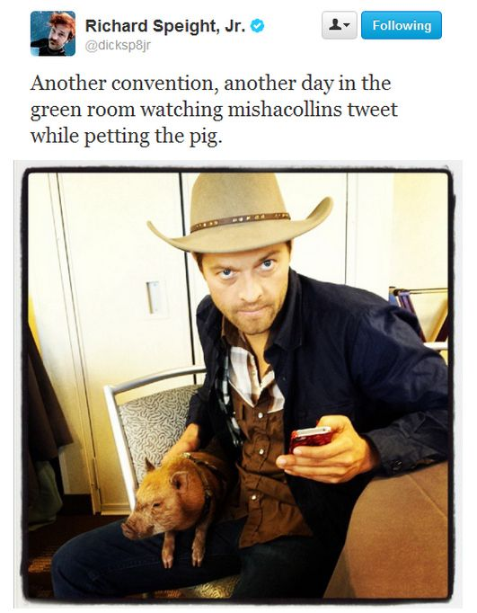 Hi Hello Here's Misha Collins Being Adorable With A Pig