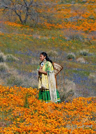 pictures of animals at white mountains az | ... Dress, Apache Girl San Carlos Res AZ « Joanne West Photography