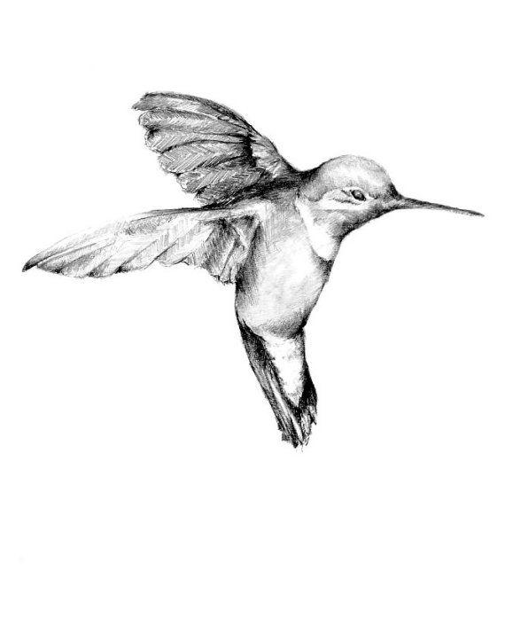 Un bello dibujo de un colibrí. A mi papá, descanse en paz, le ...