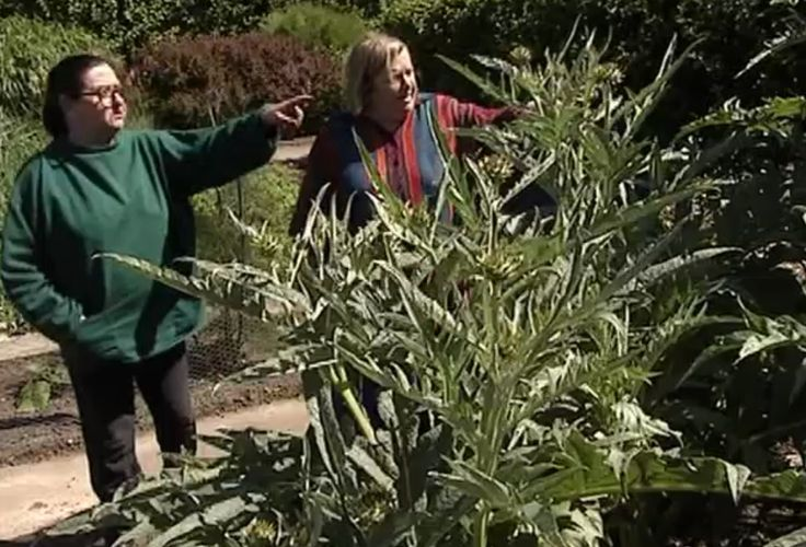 On Safari. Two Fat Ladies: Series Four, Episode Two. Location: Knowsley Safari Park, situated around Knowsley Hall on the Earl of Derby's estate in Lancashire. The recipes were Mustard Devilled Chicken; Chile Rellenos with Cherry Tomato Salsa; Lamb in Phyllo Pastry; and Apple Pan Dowdy. This photo: Clarissa spots a cardoon in the garden.)