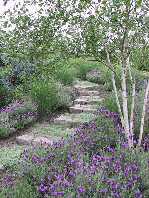 Lavender baby kitchen herb garden jardin d 39 herbes aromatiques the most beautiful - Garden pathway design ideas with some natural stones trails ...