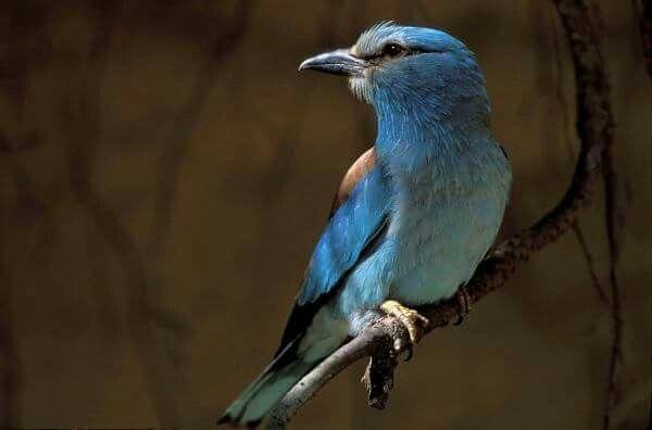 ..un uccello posato su un ramo non ha mai paura che il ramo si spezzi perché la sua fiducia non è nel ramo, ma nelle sue ali..fidati sempre di te stesso e delle tue capacità...  (Antico Spirito - fonte web)