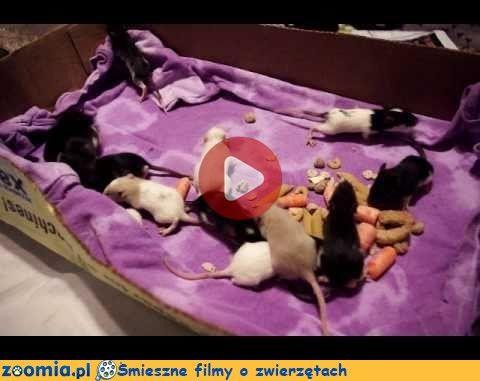 Mamy 17 dni « Inne zwierzęta « Śmieszne filmy o zwierzętach - śmieszne koty, śmieszne psy. Zoomia.pl :: Zoomia pl
