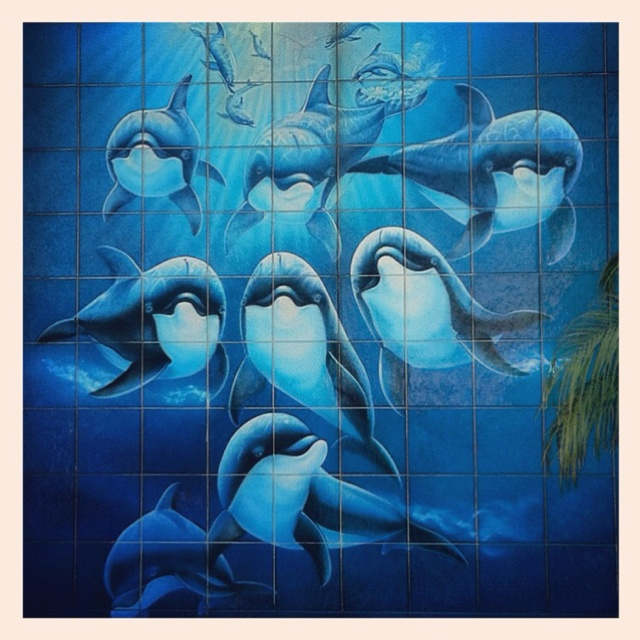 #Wyland dolphins mural in Laguna Beach :)