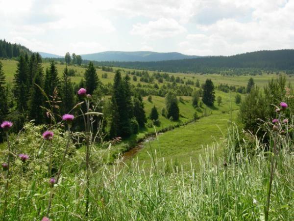 Zhůřská hnízdiště - Národní park Šumava