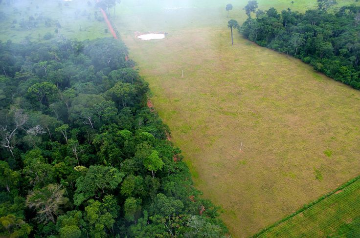 what's driving deforestation in South America