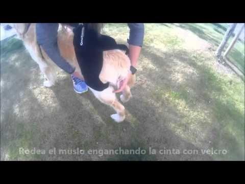 Soporte de cadera para perros con displasia