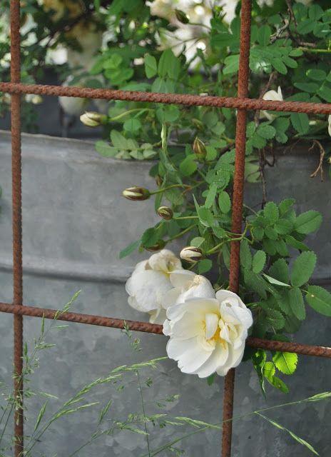 HANNAS: växthus
