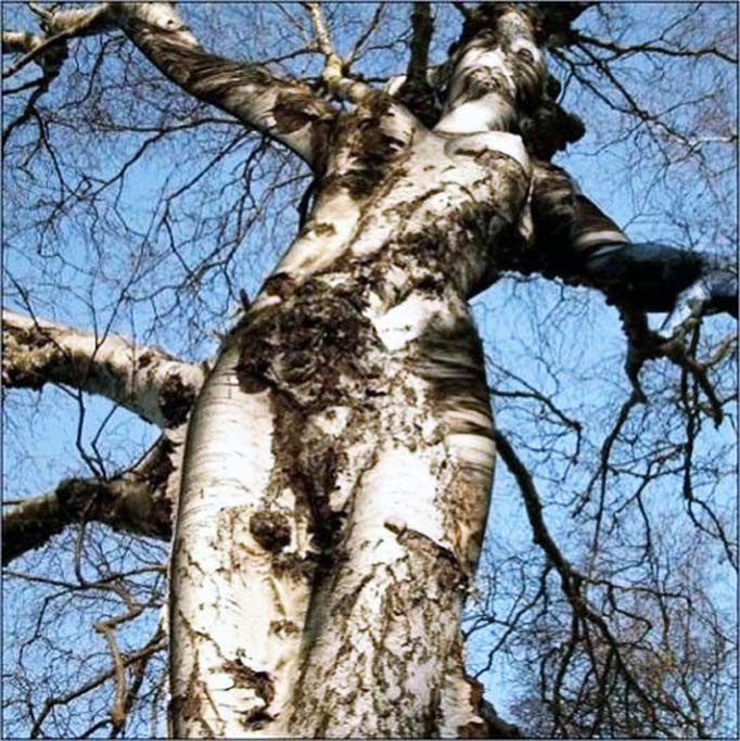 IS THIS FOR REAL??OR  IS THIS  A REAL TREE? {you'll never know!} http://www.myvibemylife.com/2013/04/17/bizarre-beauty/