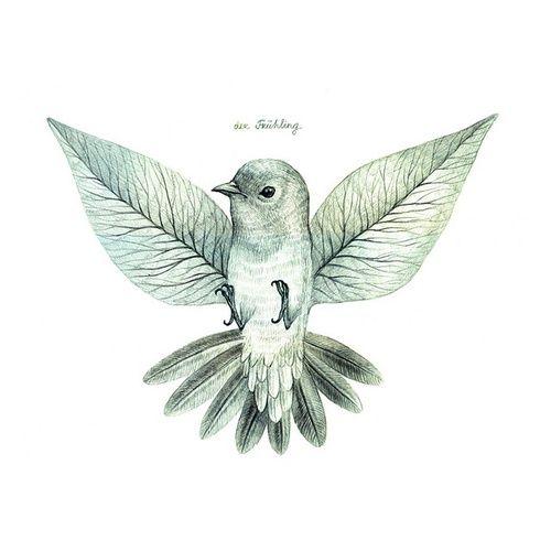wings//