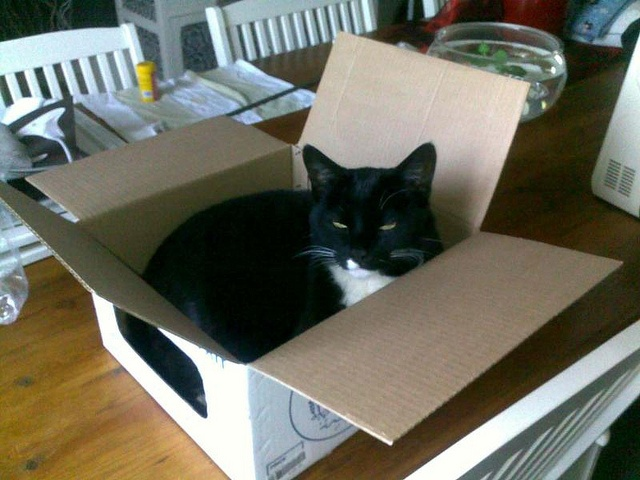 Dixie Living in a box
