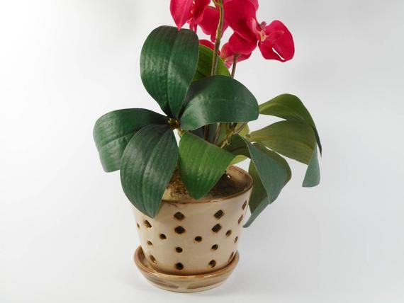 Ceramic Orchid Pot By Tamarack Stoneware Orchid Pot Orchid Roots Orchids