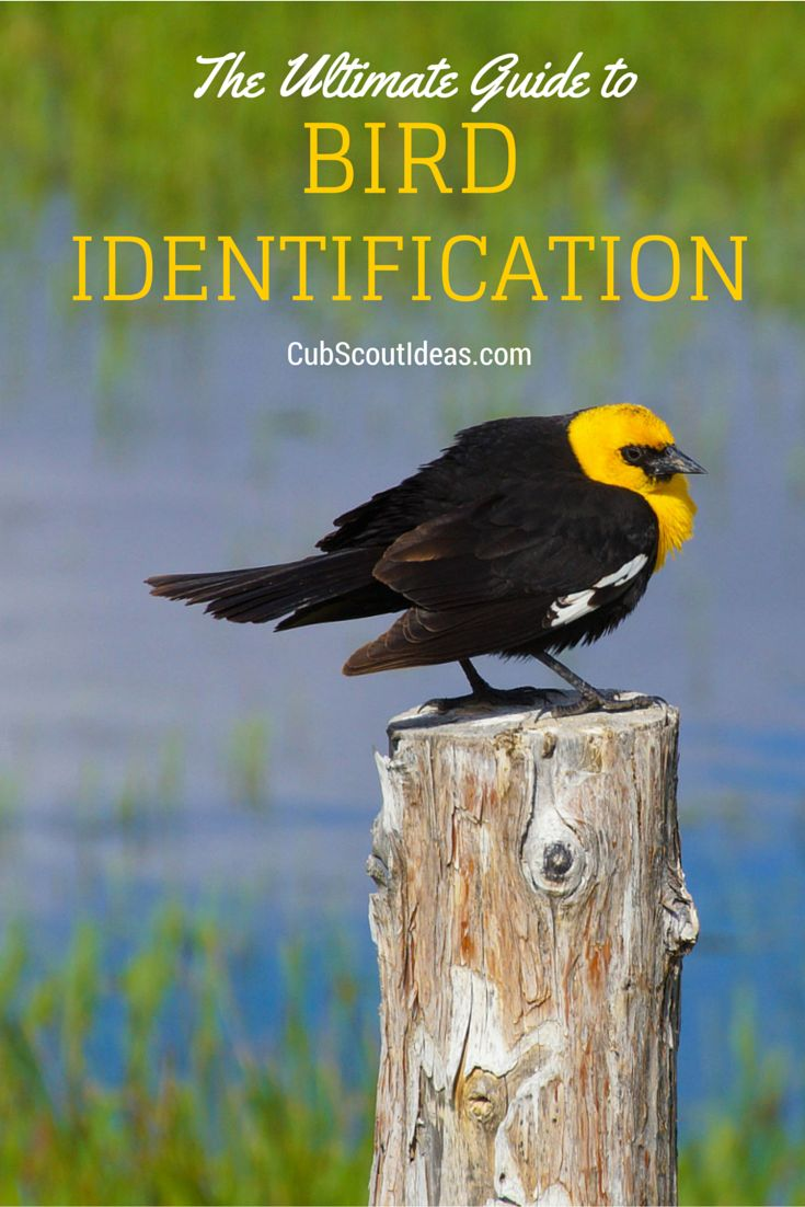 best 25 bird identification ideas on pinterest bird watching