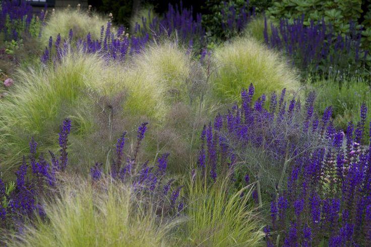 Idee für den Vorgarten oder die Grünfläche an der Mauer. Salvia 'Mainacht' en Stipa tenuissima