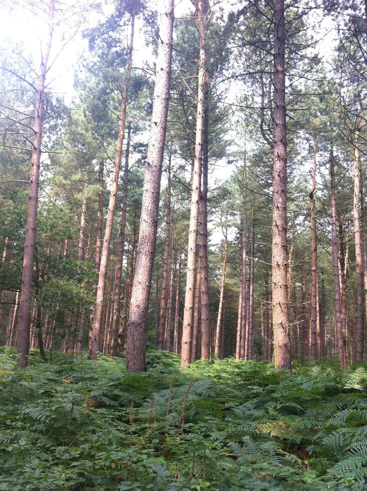 Arley Forest - Warwickshire.