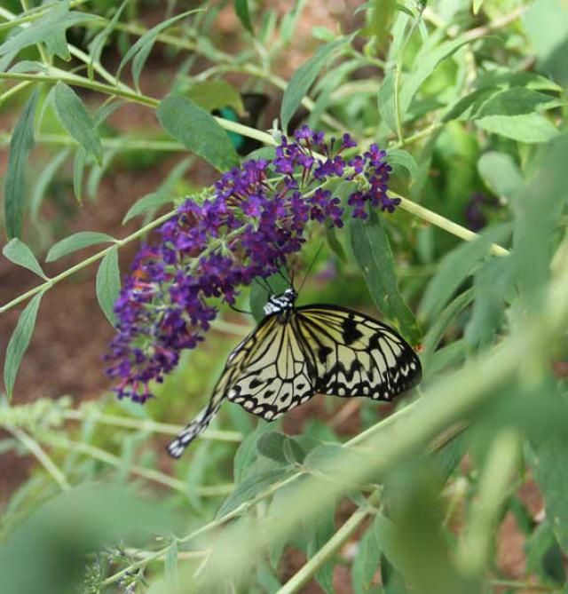 Butterfly Wonderland in Scottsdale, AZ: get the what, where, when, how much, read my review and ten things I want you to know before you go.