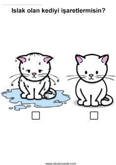 Kedi Islak Kuru Kavramı