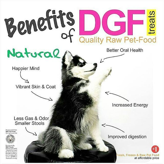 . re-assembled @dgf.treats 🐶🐱 will surely make dogs and cats happy again 😉 . #Simba was only a pup when this shot was taken. now he's an adorable #siberianhusky #husky in a loving care of @yanuarpesso . . #dogs #cats #rawfood #petfood #kucing #anjing #doglover #catlover #siberianhusky #americanbully . #infographic #photos #advertisement #contentwriter by @rblstrs @wassupphoto