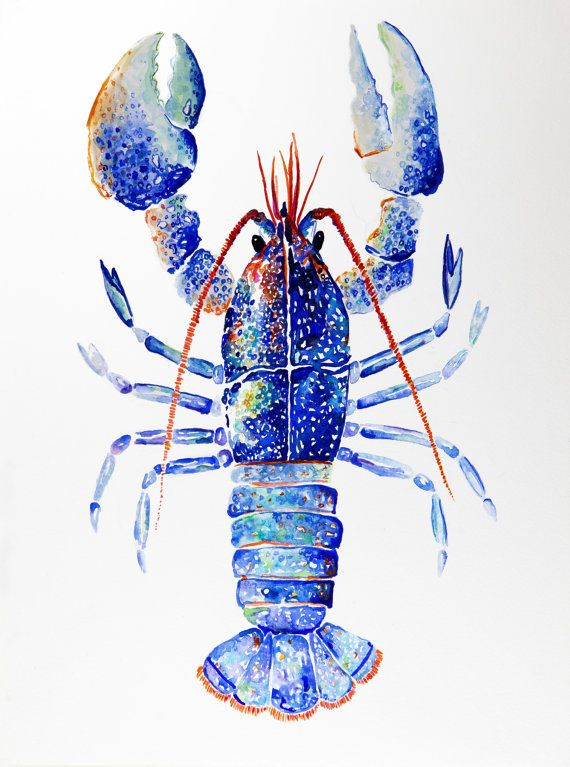 Kaleidoscope Lobster  Giclée Print by VioletteTideStudios on Etsy. $20.00 for 9x12 and $25.00 for 11x14