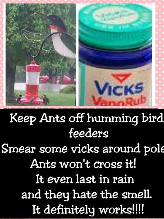 "Keep ants off humming bird feeders  Smear ring of vicks around pole. Ants won""t cross it and last even in rain! This works!!! Please pin and share. No more fancy gadgets to buy that don't work and makes refilling feeders easy and ant free. Best thing I ever descovered for hummingbirds"