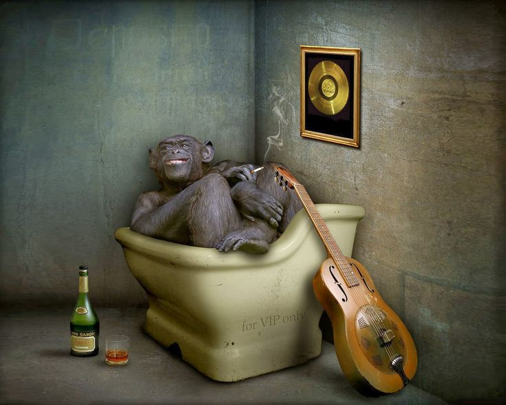 funny-monkey-in-tub-cool-creative-humour-wallpapers.jpg