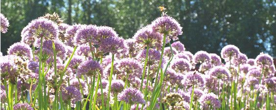Landscaping Landscape Design Henfield Garden Design Sussex Jack Dunckley