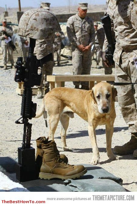 So sad ... | Troops ,Our Heros | Pinterest | Military working dogs, Working dogs and Military