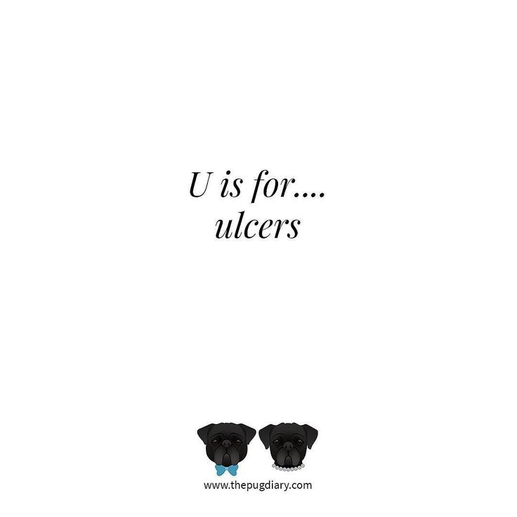 Pugs are prone to eye ulcers caused by a number of factors including scratches to their bulging eyes. Be sure to keep a close watch on their eyes and seek veterinary advice at any sign of an eye problem.  Read the full article at http://ift.tt/2mJXmhe  #thepugdiary #AtoZofPugs