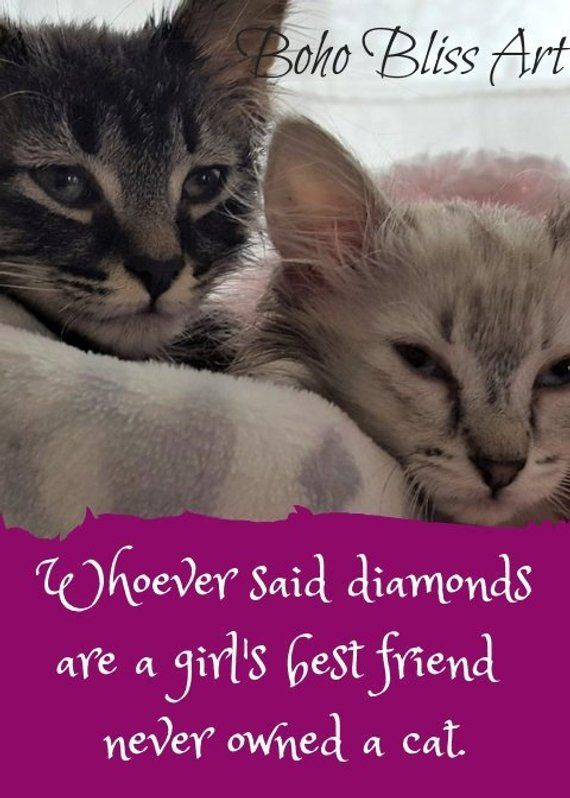 Your Cat S Picture Here Whoever Said Diamonds Are A Girl S Best