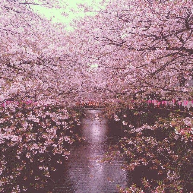 おすすめの桜の名所。毛利庭園から目黒川まで、思い立ったらすぐ行ける東京のお花見スポット5選