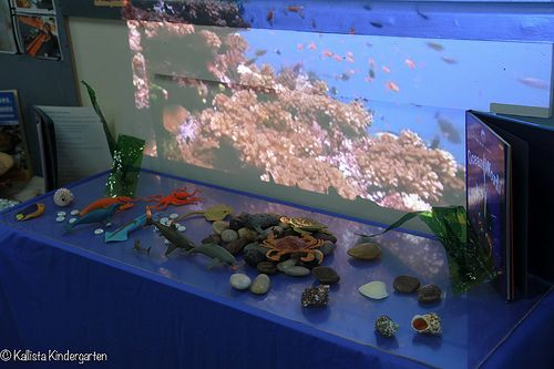 Kallista Kindergarten. Reggio Inspired Underworld Provocation: Overhead projector streaming an underwater sea scene, with shells, pebbles, books, gems, and sea animals. When children move the animals creates as shadow on the projection.