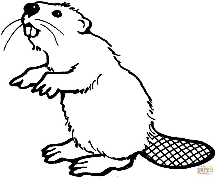 American beaver coloring page | Free Printable Coloring Pages