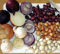 Top winter vegetables to grow in UK weather