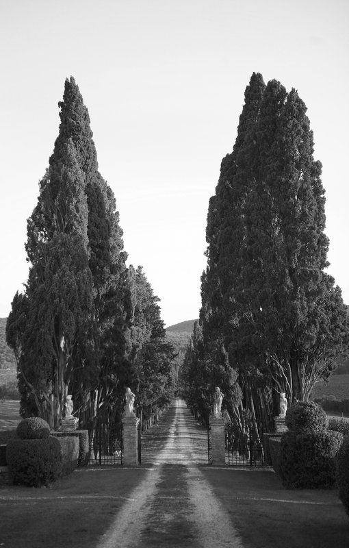 stomennano pencil pines  Deyan Grujovic Photo By DEYAN PHOTOGRAPHY