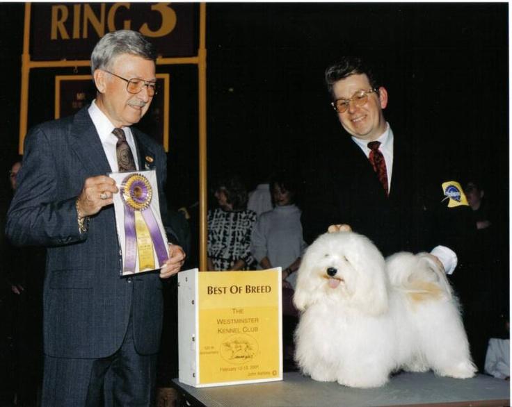 Kase Havanese NC Westminster dog show, Dog show winner