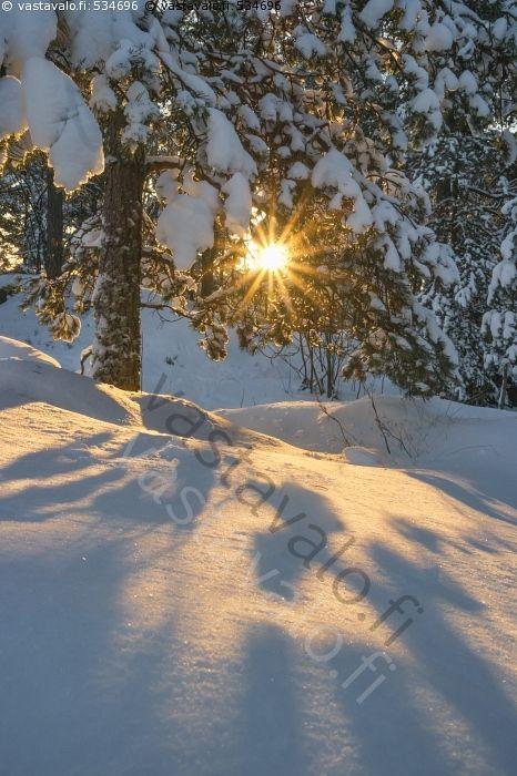 Kaunis talvipäivä - talvi talvinen aurinkoinen päivä lunta lumi lumipeite lumipeitteessä metsä puu puut mänty oksa oksat aurinko auringonsatteet valo varjo varjot joulukuu