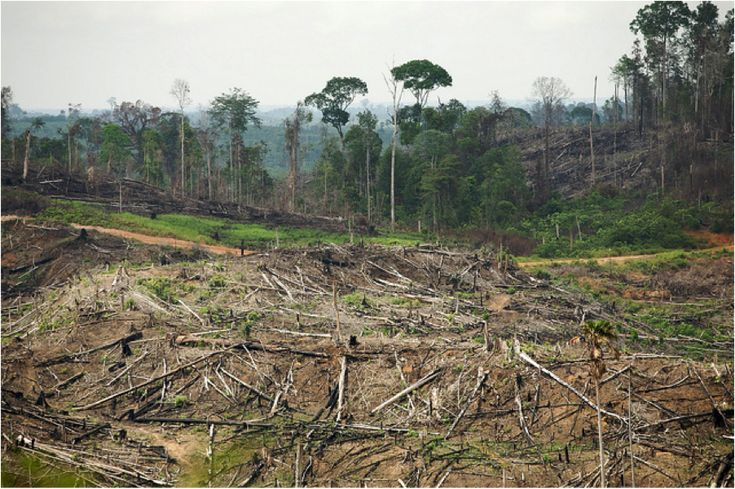 an essay on the destruction of rainforests The essay the causes and effects of rainforest destruction nowadays, human are destroying the earth's tropical rainforests about 80,000 square kilometres are being destroyed every year the rainforest destruction is the act of destroying a thick forest in tropical parts of the world.
